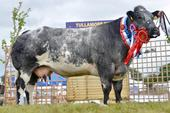 Tullamore2014_champion.jpg