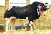 Tullamore2015_champion_res.jpg