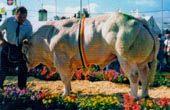 Libramont1999b.jpg